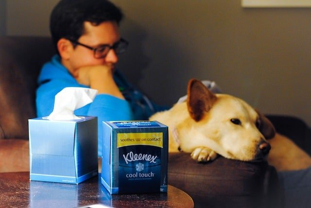 Kleenex for Allergy Season