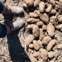 Idaho Potato Harvest Tour 2015 | foxeslovelemons.com