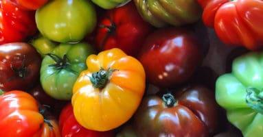 Multicolored heirloom tomatoes